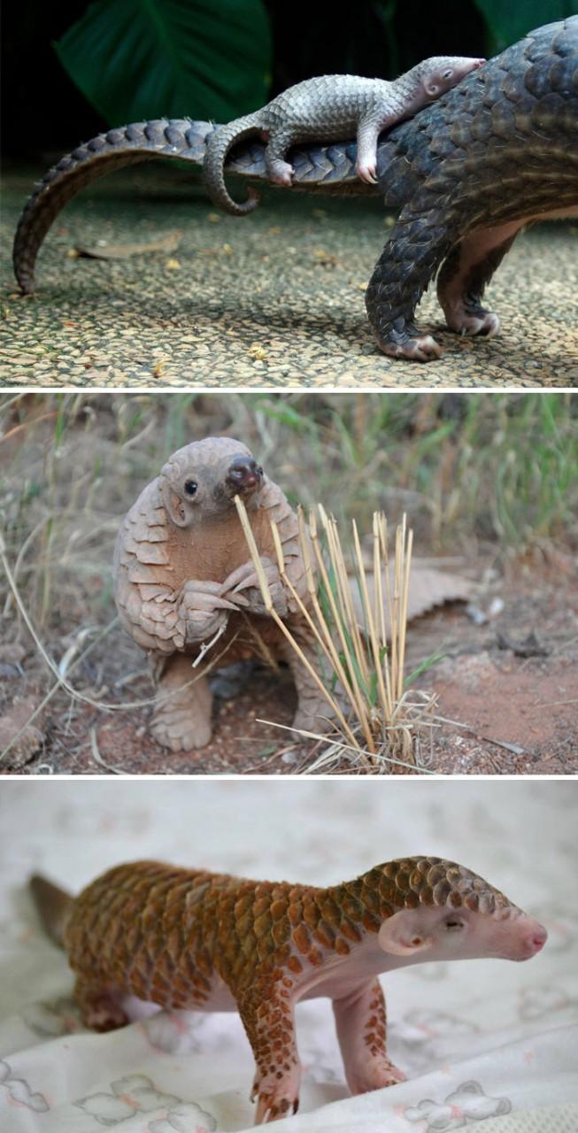 Детский сад: редкие малыши животных, которых мы никогда не видели