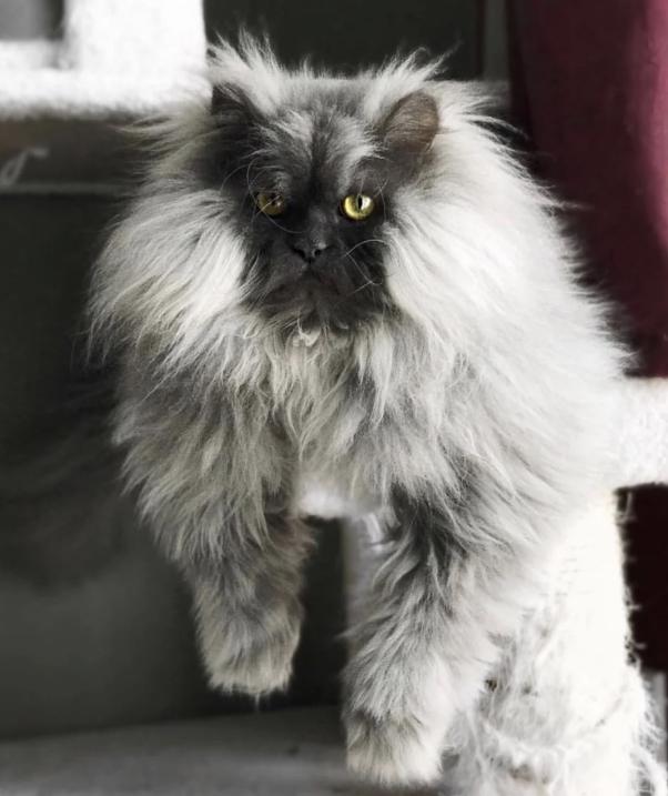 Фото дня: самый злой кот в мире detected