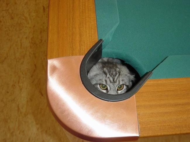Ниндзя-кошки играют в прятки по-крупному