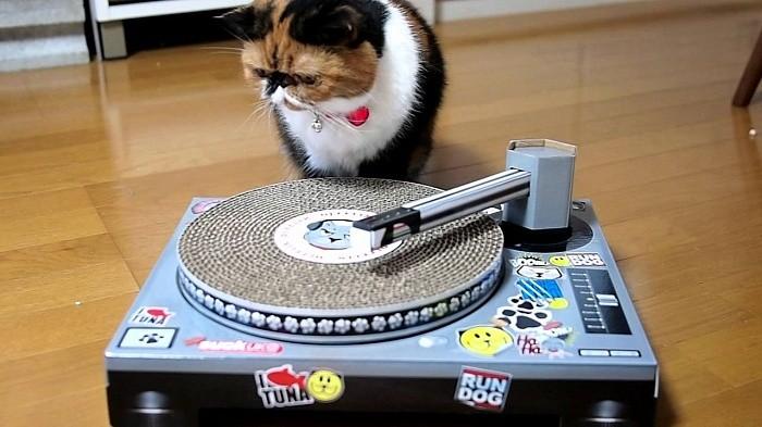Кошки захватывают мир людей!