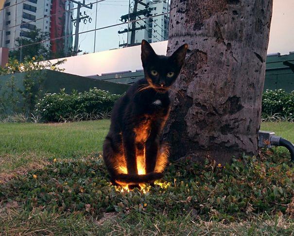 25 доказательств того, что все кошки – прислужники Сатаны